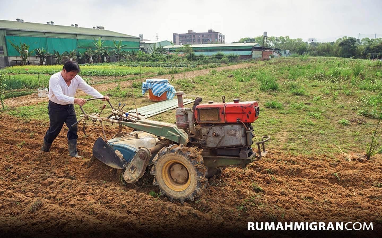 Pertanian di Taiwan