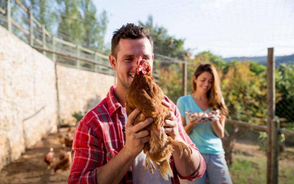 Ayam Masuk Toko