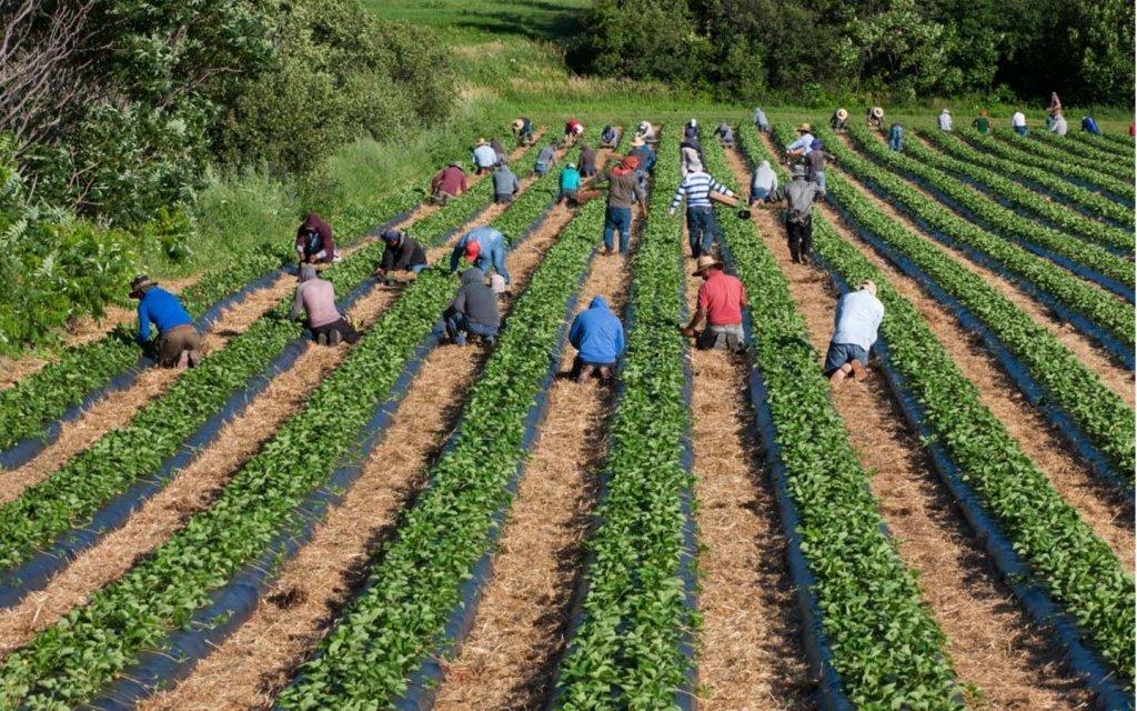 Menjadi Pekerja Migran Sukses