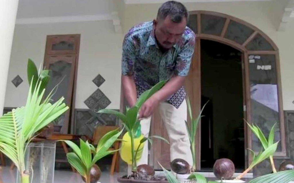 PMI Petani Bonsai Kelapa